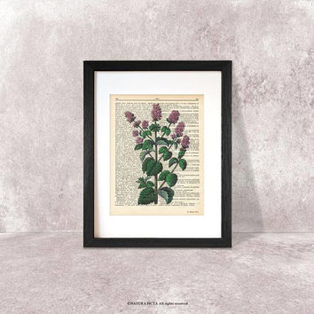 Mint herb dictionary print-Kitchen wall art-mint herb on book page-mint herb print-Botanical print-herbs spices print-kitchen decor-DP181