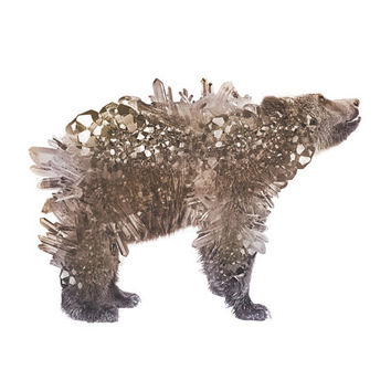 Crystal Bear Signed Color Print | Art | Photograph | Design