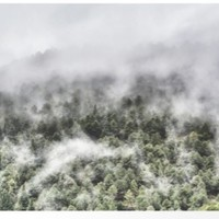 """Mountain light III"". Foggy forest. by Guido Montañés"