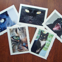 Five Cat Notecards Kitten Cards Nature and Wildlife Photo Note Cards Set I - Free Shipping