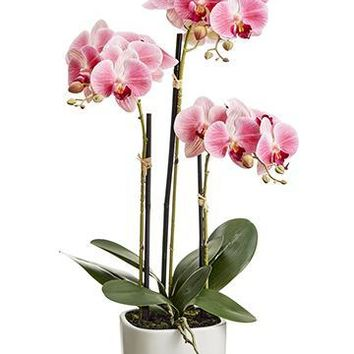 """Pink Fake Orchid Flower Plant in Terracotta Pot - 25"""" Tall"""