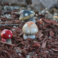Cluster Of Toadstools In Fairy Garden Photograph 3 x 3 Mini Wall Art or Cute Card Great Christmas Gift