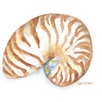 Nautilus Seashell Watercolor