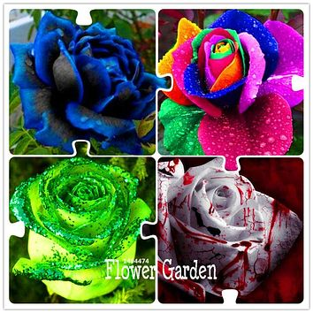 Time-Limit!! 50 Seeds/Lot Rainbow rose seeds, Different Colors Rare Rose, Beautiful rose Bonsai plants for home & garden