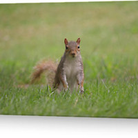 Now you see me, (squirrel!) by Elinor Barnes