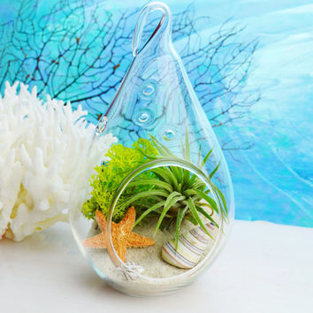 Teardrop Glass Terrarium Kit with Tillandsia  Air Plant ~ Choice of Sand and Starfish ~ Gift idea ~ Great for Dorm Room