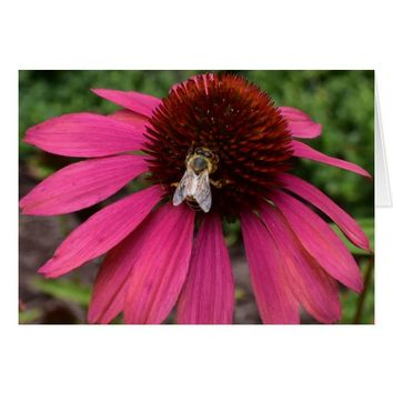Honey Bee on Coneflower Greeting Card