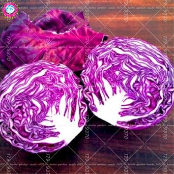 100Pcs Purple Cabbage Seeds Organic Half cold cabbage vegetables Seeds Nutritious for health For Home Garden Plants Salad food