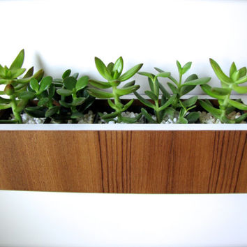"""Succulent Planter ~ Centerpiece ~ Teak and White ~ Desktop OR Wall Hanging Style ~ actual size 12.5"""" x 3.38"""" sq ~ plants not included"""