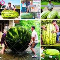 2018 Hot 30pcs Giant Watermelon Seeds Fruit seed Vegetable Interest Easy to plant For Garden & Farm Family Plant Big melon seeds