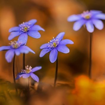 'Blue liverworts in the morning sun' by JBlaminsky