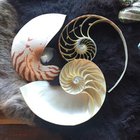 3 Section Nautilus Set