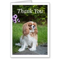 Thank You Purple Flowers Cavalier King Charles Greeting Card
