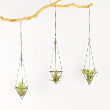 Mkono Air Plant Holder Hanging Planter Pot Geometric Himmeli for Tillandsia Airplants Indoor Decoration with Chains, Bronze