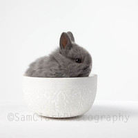 Bunny Rabbit Photo Nursery Art, Pet Portrait - Front Page, 'Baby BUNNY in a Bowl' cute baby rabbit, small animal, 10x10 photo, grey, white