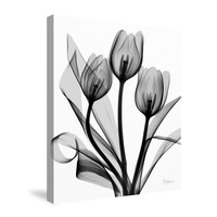 Black and White Tulips Canvas Wall Art