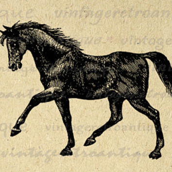 Antique Horse Image Printable Download Digital Graphic Illustration Vintage Clip Art Jpg Png Eps  HQ 300dpi No.2314