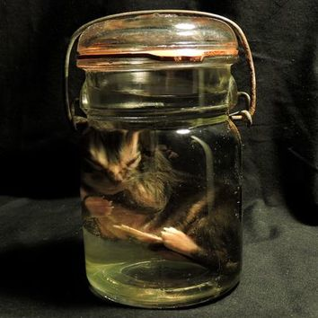 Fetal Cat Wet Specimen Jar from Forgotten Boneyard