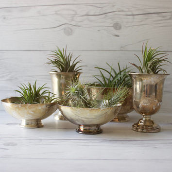 Set of 5 Vintage Silverplated Silver Pedestal Bowls | Instant Collection | Air Plant Holders