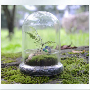 2PCS/Set DIY Micro landscape ecological glass cover,moss terrarium kit for home decor or garden ornament