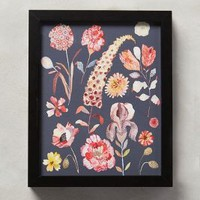 Botanical Specimen Wall Art by Michelle Morin Carbon One Size Decor