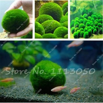 New Live in the Aquarium Plants, Moss Grass Seed Plants Seeds Indoor Ornamentals Lanscape for Home Garden 500 Pcs Free Shipping