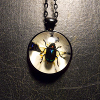 Real Rainbow Beetle Specimen on Real Pressed White Flower in Resin Rhinestone Cameo