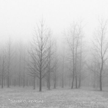 Minimalist Mist Tree Photography Lonely Foggy Fading Winter Fine Art Photography Wall Print 16x20 B&W Bare Tree Branches