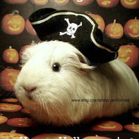 GUINEA PIG PIRATE costume