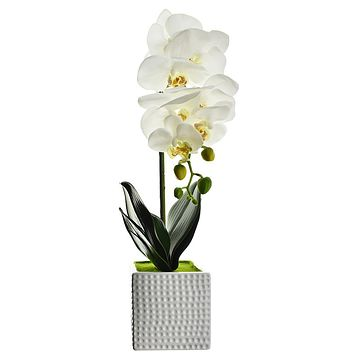Artificial Moth Orchid with Square Pot, White, 20-Inch