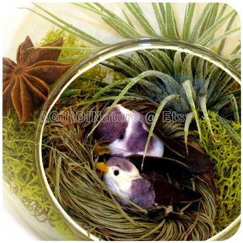 Autumn Love Birds Tillandsia Aviary, Hanging AIR PLANT TERRARIUM Kit, Glass Orb Globe, Woodland Party Decor Housewarming Gift For Him
