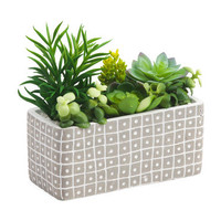 8in Faux Succulents In Cement Ledge - Living Room - T.J.Maxx