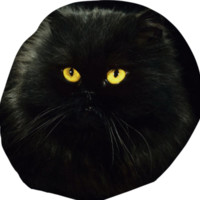 Black Cat Bean Bag Chair created by ErikaKaisersot | Print All Over Me