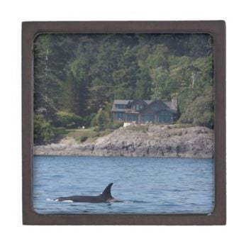 Beautiful Killer Whale Orca in Washington State Gift Box