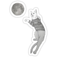 Cat trying to catch the Moon.