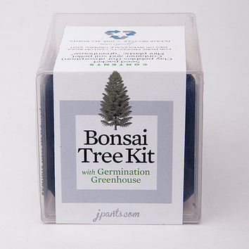 Sweet! Giant Sequoia Bonsai Tree Kit With Germination Greenhouse -- Perfect for Your Little Terrarium or Garden -- Sequoiadendron giganteum