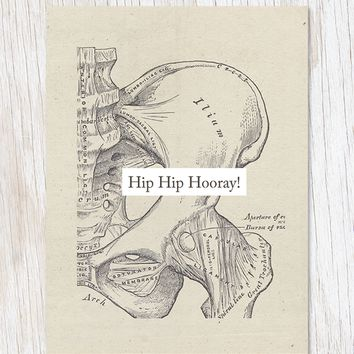 Hip Hip Hooray: Anatomy Card