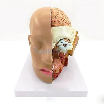4 Part Human Head Skull Brain Anatomy Anatomical Oral Nasopharyngeal Model Medical Science Lab School