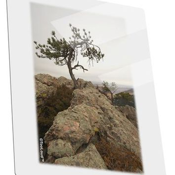 Stone Tree Colorado Metal Panel Wall Art Portrait - Choose Size by TooLoud