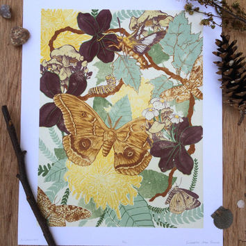 """Moth Life Cycle Illustration Art Print, Original Archival Giclee Print, 11x14"""", Watercolor / Gouache Painting"""