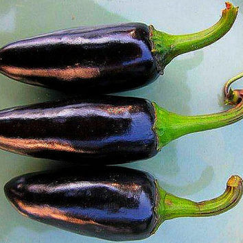 Black Hungarian Sweet Pepper, 25 heirloom seeds, non GMO, smoky flavor, purple pepper, black foliage, ornamental chile, pretty plant