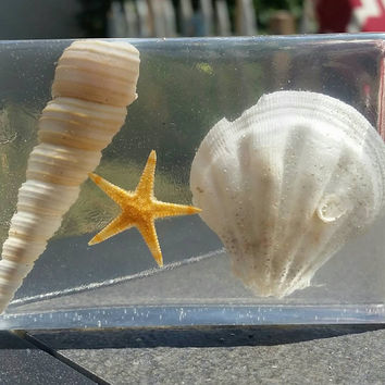 Sea Life Paperweight - Sea Scape - Shell - Starfish -  Bookend - Ocean - Beach - Home OfficeDecor - Real Starfish - Real Sea Shells - Resin