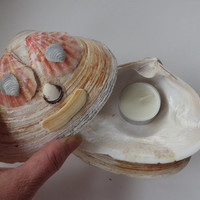 Clam Shells Candle Holder with Cover