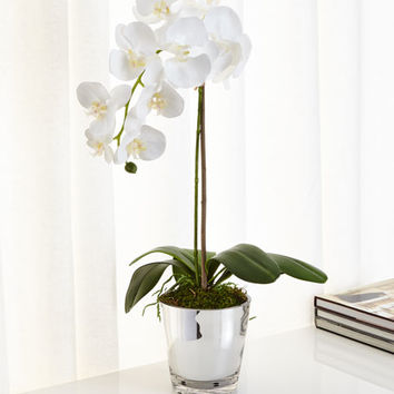 Natural Decorations Orchids in Mirrored Glass Faux-Floral Arrangement