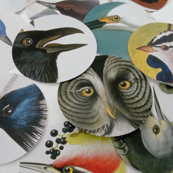 Audubon Bird Print Round Cut Outs, Round Bird Tags, Scrapbook and Collage Supplies, Birds of America, set of 26