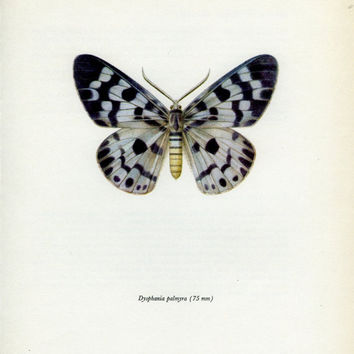 Vintage Moth Print, Blue Tiger Moth (83) Prochazka, 1966, Butterfly, Lepidoptera, Natural History, for Framing