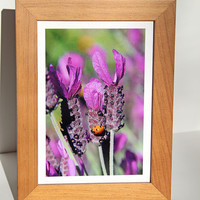 Ladybug in Lavender Photo Greeting Card, Fine Art Photography, Handmade Garden Lover's Notecard, Image from the Garden, Card for Gardeners