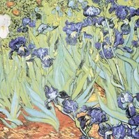 Irises by Vincent Van Gogh Fine Art Print