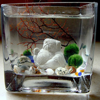 Live Marimo Balls and Mini Pug Buddha Mini Aquarium / Terrarium