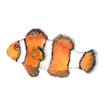 Watercolor fish painting, fish art, watercolor painting, clown fish, tropical fish, ocean watercolor, original painting - 7X5